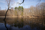 Chester, New York - A vernal pool on the first day of spring at Goosepond Mountain State Park. March 20, 2010.