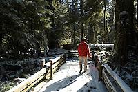 A man walks along the boardwalk during a rare snowfall in the ancient cedar trees at Macmillan Provincial Park near Port Alberni, BC Canada.