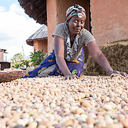 CAPTION: Serita sorts ground nuts outside her home. She looks forward to the increased income opportunities the project will provide for her household. People have been known to come to households like hers looking for food, and she says that she hopes that this will be a thing of the past. LOCATION: Mandivingera Village, Bikita District, Masvingo Province, Zimbabwe. INDIVIDUAL(S) PHOTOGRAPHED: Serita Magara.