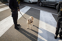 COMO, ITALY - 25 October 2013: A cash dog of Italy's Guardia di Finanza (Financial Police) waits with its instructor to inspect a car suspected of smuglling undeclared cash into Switzerland in Como, Italy, at the border with Chiasso (Switzerland) on October 25th 2013. Cash dogs are sniffer dogs that have specially trained to detect the ink on currency notes. In the effort of cracking down on tax evasion and cash smuggling, the Guardia di Finanza works with highly trained dogs in outposts along its borders with Switzerland and France, and in international airports such as Rome Fiumicino and Milano Malpensa.<br /> <br /> In Italy, the law allows to travel with up to 10,000 euros in cash. Beyond that, one must declare to the authorities.<br /> <br /> In 2012, the Guardia di Finanza of the  borders with Chiasso in Switzerland have intercepted more than 55 million euros not declared. In 2013, until September 31st, they have intercepted more than 92 million euros.  The Guardia di Finanza of the Chiasso outpost has been using cash dogs since 2010.