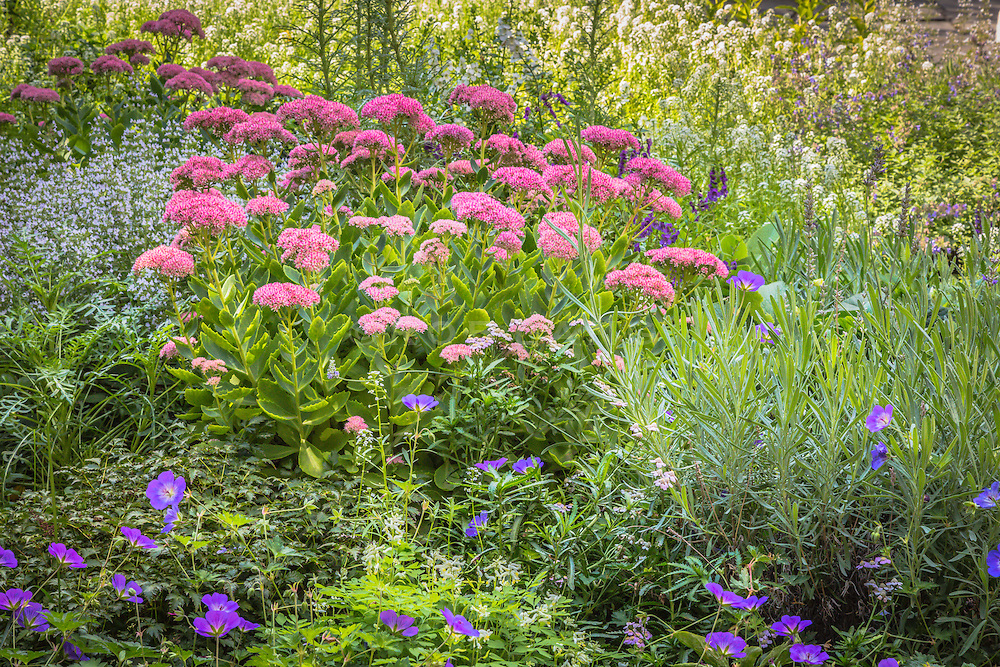 a beautiful garden filled with colorful flowers