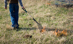 "A participant in the ""Flames in the Flint Hills"" drags fire across the prairie grass of the Flying W Ranch near Clements, Kansas. This agritourism event allows ranch guests to take part in lighting the prescribed burns. Prairie grasses in the Kansas Flint Hills are intentionally burned by land mangers and cattle ranchers in the spring to prepare the land for cattle grazing and help maintain a healthy tallgrass prairie ecosystem. The burning is also an effective way of controlling invasive plants and trees. The prairie grassland is burned when the soil is moist but grasses are dry. This allows the deep roots of the grasses to survive and the burned grasses on the soil surface return as nutrients to the soil. These nutrients allow for the rapid growth of new grass. After approximately two weeks of burning, new grass emerges. Less than four percent of the original 140 million acres of tallgrass prairie remains in North America. Most of the remaining tallgrass prairie is in the Flint Hills in Kansas."
