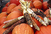 Pumpkins and Indian Corn on display at a road-side stand in New England, USA