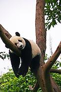 Chengdu Images