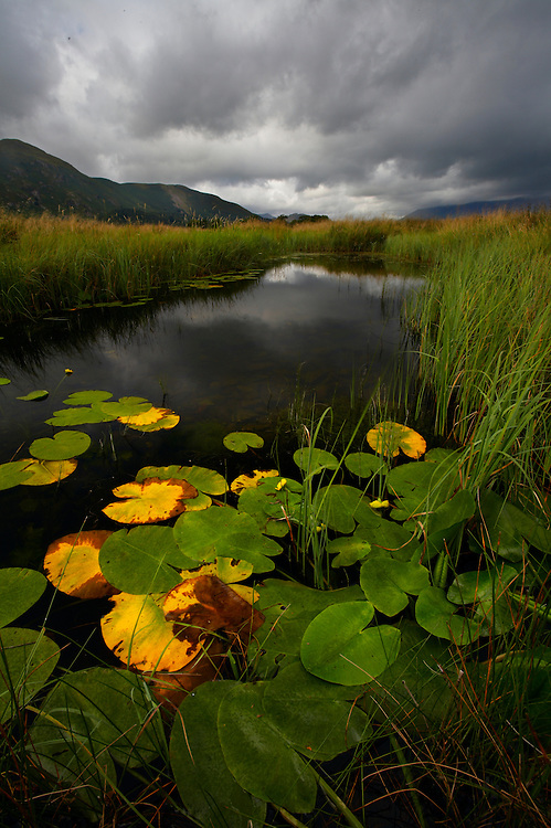 I loved the strong colours of the lilypads providing wonderful foreground for the stream with its reflection of fast approaching rain clouds.