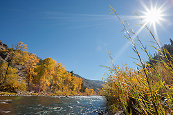 """Truckee River in Autumn 12"" - Photograph of yellow leaved cottonwood trees and the sun, taken along the shore of the Truckee River in Autumn."
