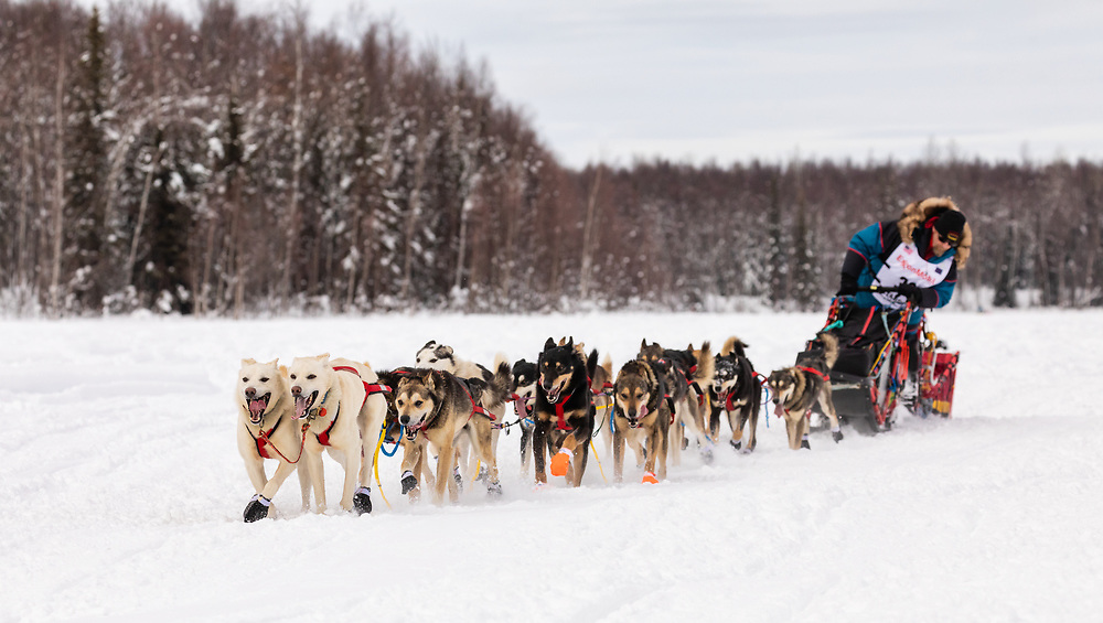 Musher Mitch Seavey after the restart in Willow of the 47th Iditarod Trail Sled Dog Race in Southcentral Alaska.  Afternoon. Winter.