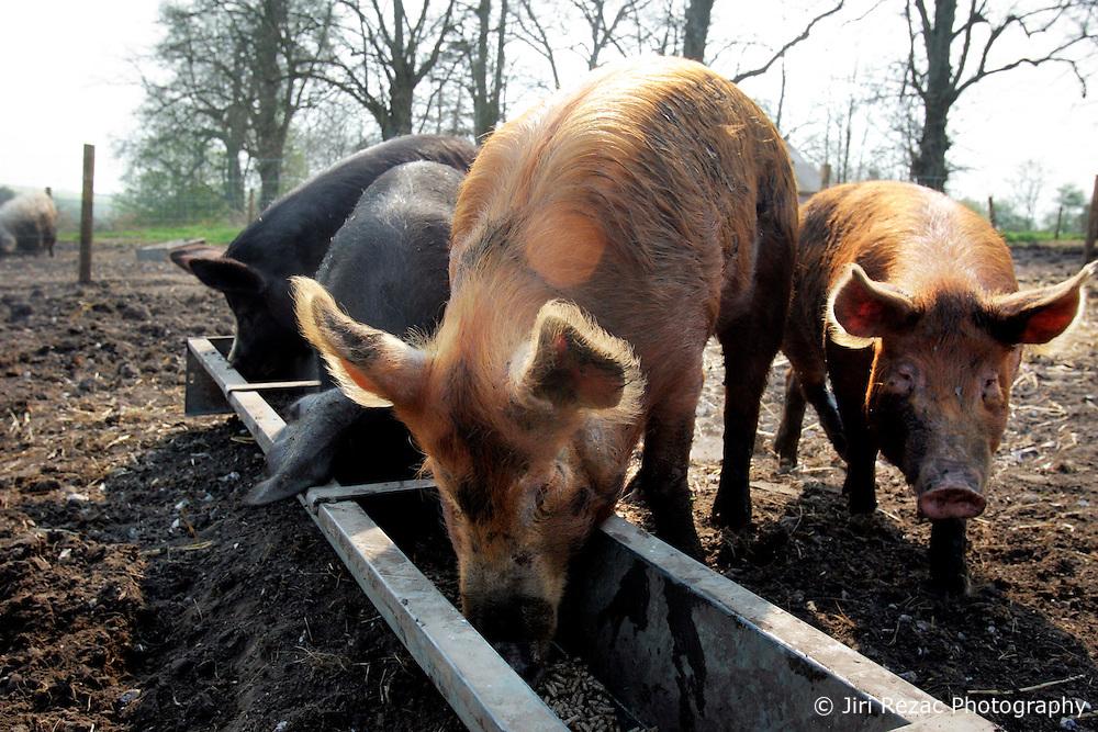 Paradise Pig Farm Pig Keeping Course Jiri Rezac Photography