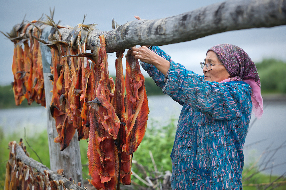 Vera Spein arranges salmon on a drying rack at fish camp near Kwethluk, Alaska. Dried, smoked, and fresh salmon are staples of the subsistence lifestyle.