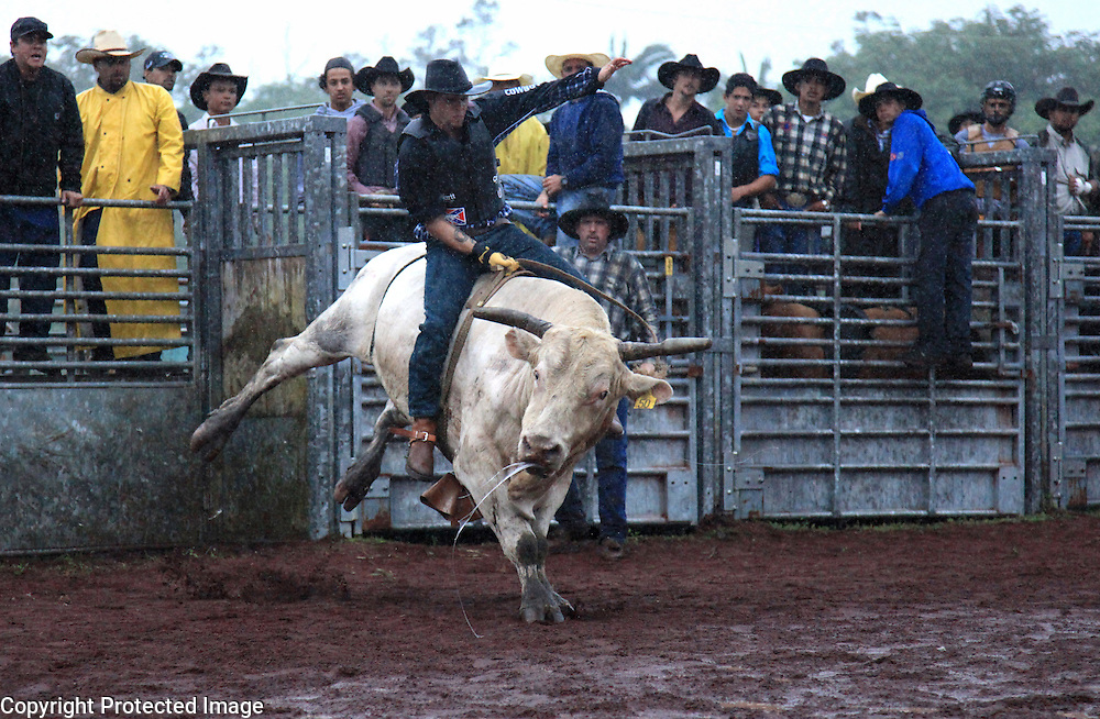 """A bull rider competes in the bullriding competition at the """"Panaewa Stampede Rodeo"""" at the Panaewa Equestrian Center in Hilo, Hi. Participating in rodeos has always been a large part of the Hawaiian cowboy culture which served to bring cowboys together outside of work to have fun and bond.  """"There were Japanese cowboys, Phillipino cowboys, Hawaiian cowboys, Portuguese cowboys, Chinese cowboys...We all ate together, played together, rode horses together, rodeod together.  It was all family,"""" says Sonny Keakealani of his younger years as a cowboy and the community he was part of."""