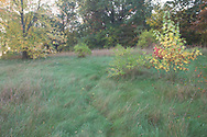Early morning on a rurual hillside in southern Wisconsin