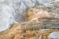 Palette Spring Terraces composed of  travertine deposits colored by thermophilic bacteria. Mammtoth Hot Springs, Yellowstone National Park
