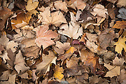 fall leaves in Laurel, Mississippi