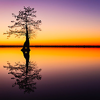 In the middle of the Great Dismal Swamp (actually the highest point in the swamp) is one of Virginia's only two natural lakes. Lake Drummond is only accessible by boat and beautiful bald cypress trees line the edges of the lake. This image taken during the very last light of twilight was actually taken from a perch on the roots of another bald cypress out in the lake.