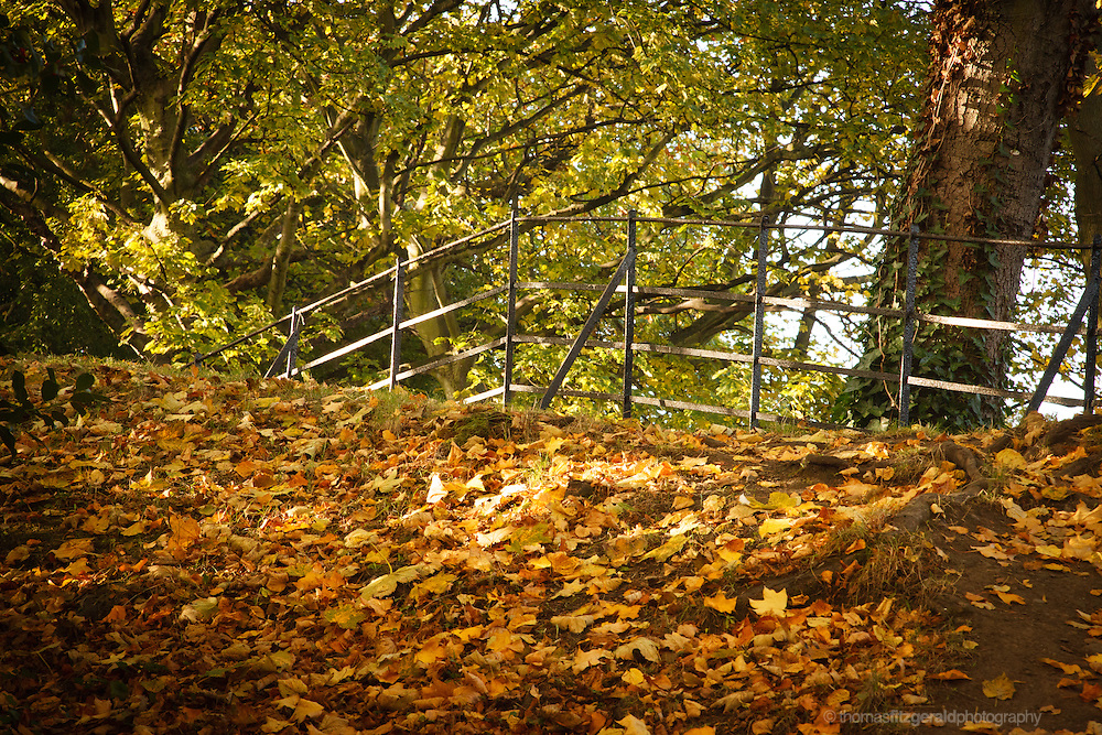 Old railings in a park surrounded by fallen brown leaves