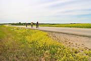 Highway 41, between Alvena and Wakaw