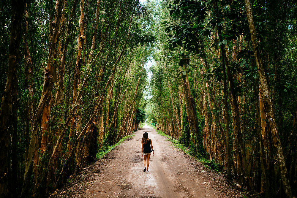 A woman walks through the forests of the Tra Su Sanctuary in Chau Doc, in the Mekong Delta of southern Vietnam.