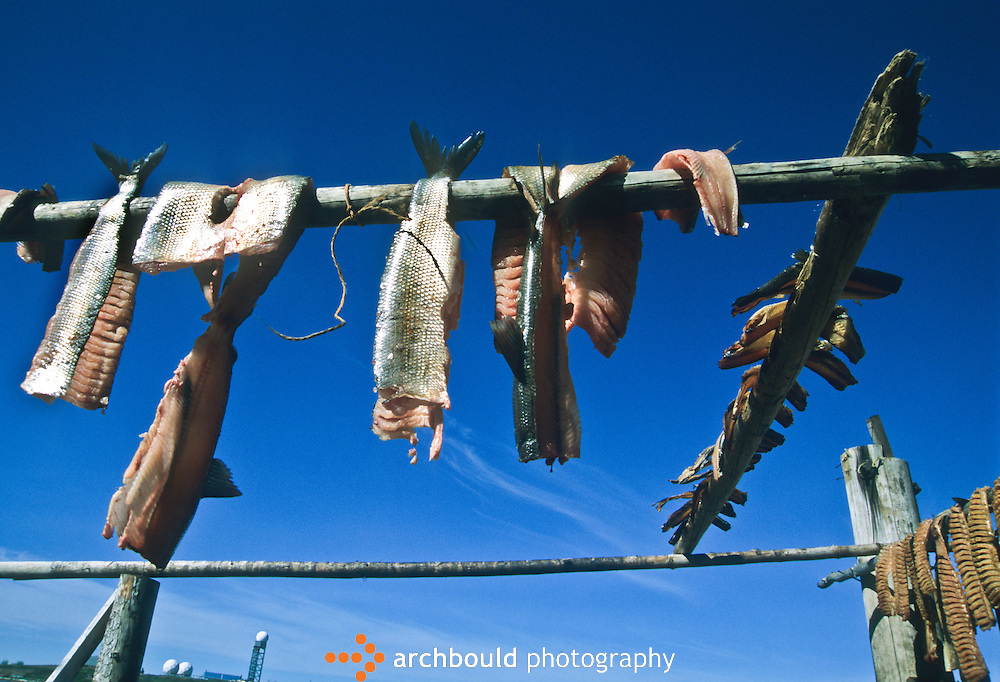 Fish dries on racks in Tuktoyaktuk with a dew line site in the background.