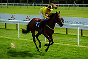 Spring Holly ridden by Jimmy Quinn and trained by Milton Bradley in the Visit Valuerater.Co.Uk For Best Free Tips Handicap (Value Rater Racing Club Summer Sprint Series) (Class 6) race. - Ryan Hiscott/JMP - 21/08/2019 - PR - Bath Racecourse - Bath, England - Race Meeting at Bath Racecourse