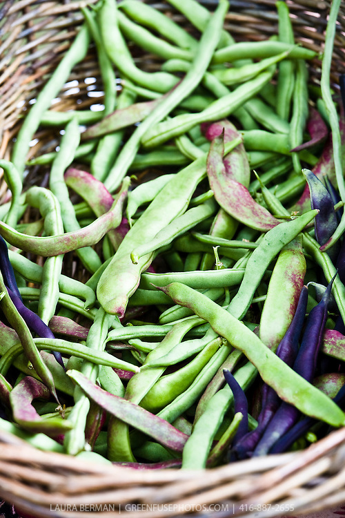 Green, purple and striped shell beans at the farmers market.