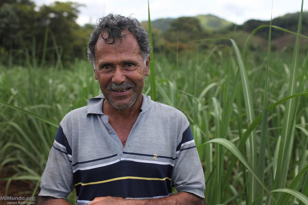 Olger Mora Solis stands in a sugar cane field belonging to his son-in-law Marco Tulio Rodríguez Rodríguez. COOPEATENAS, Atenas, Alajuela, Costa Rica. August 23, 2012.