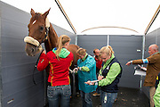 Fabienne Lutkemeier - d'Agostino FRH<br /> Alltech FEI World Equestrian Games™ 2014 - Normandy, France.<br /> © Hippo Foto Team - Leanjo de Koster<br /> 25/06/14