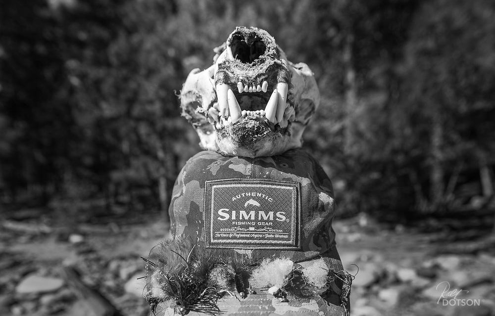 A cougar skull found along the Salmon River sits atop my son's SImms hat  to give dimension to  the size of these felines.