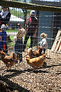 QUEENS, NY - May 6, 2017: Children look at the chickens at the Queens County Farm Museum on the day of the Sheep Shearing Festival.<br /> <br /> <br /> <br /> Credit: Clay Williams for 111 Places in Queens You Must Not Miss.<br /> <br /> © Clay Williams / http://claywilliamsphoto.com