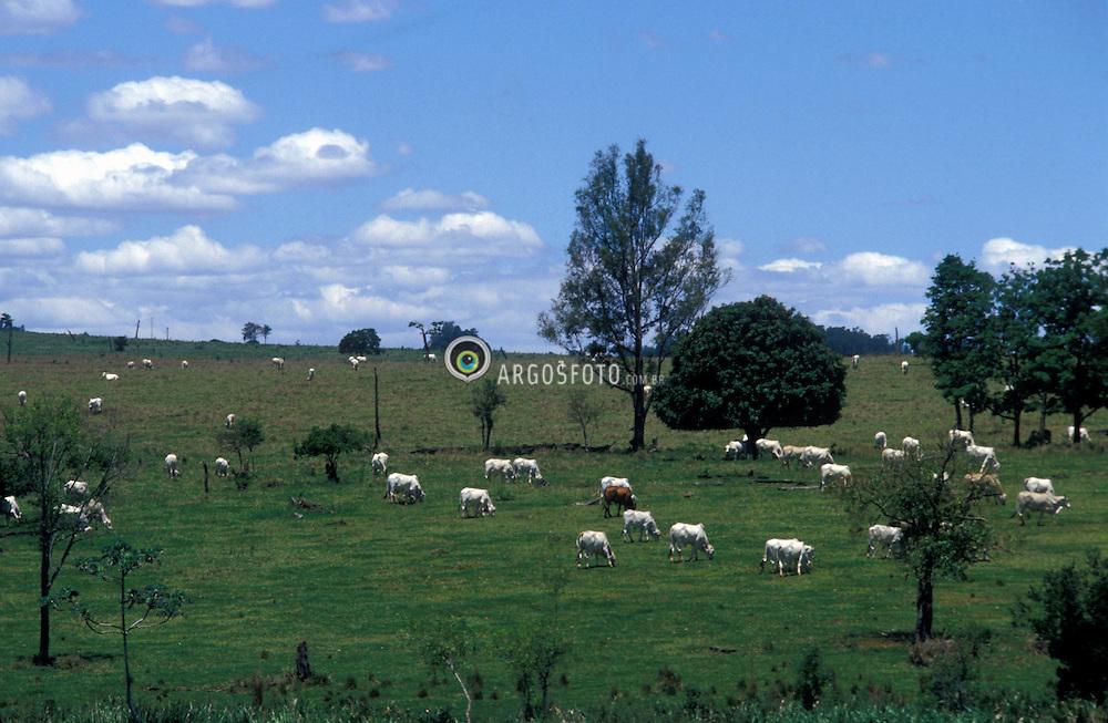 Bariri, Sao Paulo, Brasil. 10/1980..Pasto de gado de corte nelore./ Nelore Cattle in pasture..Foto ©Daniel Augusto Jr./Argosfoto