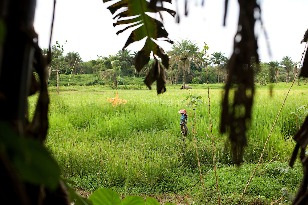 Scarecrows in the rice fields, Kingsville #7, Liberia.