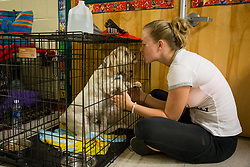 September 9, 2017 - Florida, U.S. - LOREN ELLIOTT   |   Times .Jerica Weiss comforts her dogs Argot (front) and Como (back) at a hurricane shelter inside Kingsway Elementary School in Port Charlotte, Fla., on Saturday, Sept. 9, 2017. The shelter had over 900 people checked in Saturday afternoon, in addition to 151 pets, in anticipation of Hurricane Irma. (Credit Image: © Loren Elliott/Tampa Bay Times via ZUMA Wire)
