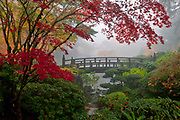 Autumn maples and morning ground fog create a whisper quiet atmosphere around Moon Bridge, at Portland, Oregon's Japanese Garden.