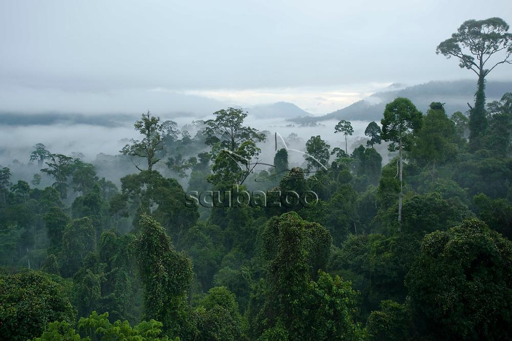 Forest canopy at dawn, Maliau basin, Sabah, Borneo, East Malaysia.