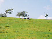young boy rolls down a grass covered slope in a park