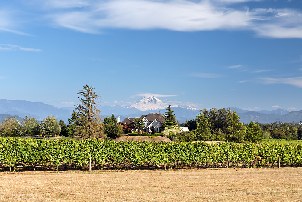 The vineyard and a large house at the Mt. Lehman Winery in Abbotsford, British Columbia, Canada.  Mount Baker (in Washington State) looms in the background.