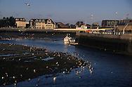 Deauville   Normandie  France   /   Deauville le port,  l Normandie  France   / L1437  /  R00147  /  P111729