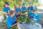 20170727 Dye Garden Team and Garden