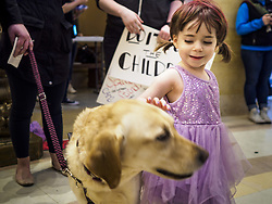March 27, 2019 - St. Paul, Minnesota, U.S - MAJESTA CISNEY, 3 years old, from St. Paul, MN, pets a therapy dog at a rally to support domestic violence survivors. About 200 people came to the Minnesota State Capitol to rally for two bills in the Minnesota legislature. HF464 would invest in intervention programming for the perpetrators of domestic violence and HF479 supports state funding for domestic violence prevention in under served communities. (Credit Image: © Jack Kurtz/ZUMA Wire)