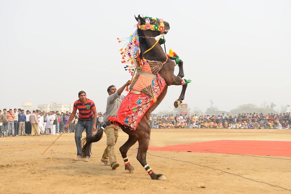 Braj Mahotsau festival, Bharatpur,Rajasthan,India,asia (m)