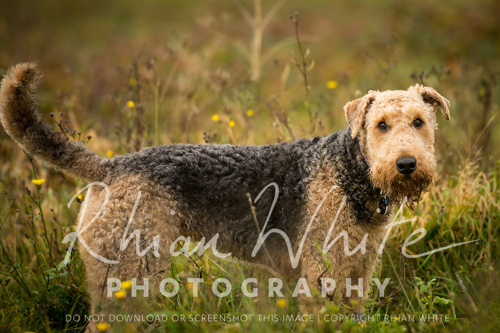 Images of Hazel at Stanmer and Sheepcote Valley