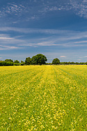 Farm Field, Parsonage Rd, Sagaponack, NY