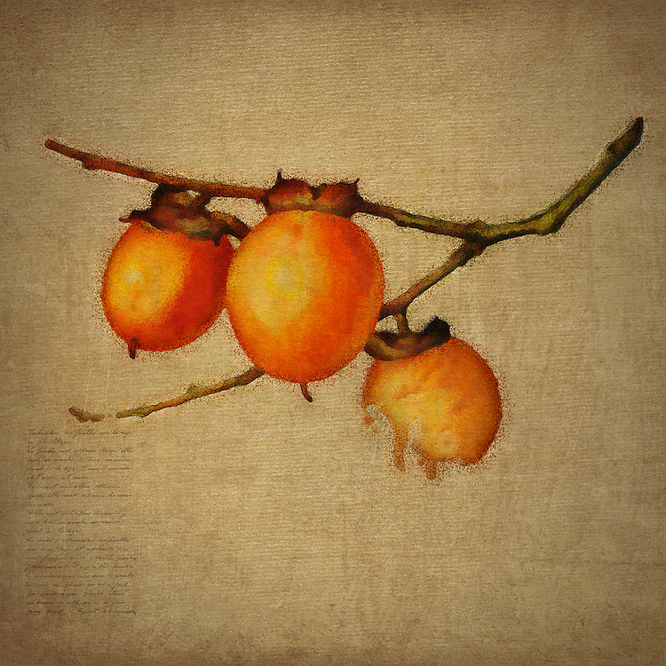Festive is perhaps the best way to describe this depiction of orange berries by Jan Keteleer. The truth of the matter is that this fine art piece is an excellent example of the notion that beauty can be expressed in a number of ways. Your response to this can prove to be entirely different from someone standing right next to you.<br />