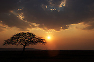The sun sets over Tanzania's serengeti with an acacia tree in the foreground.