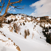 Natalie Segal skiing in the backcountry near Jackson Hole Mountain Resort.