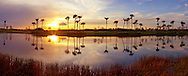 Panorama of Palm Trees at Sunset with Reflecting Pool