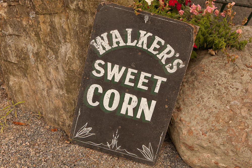 A sign advertising sweet corn for sale at Walker's Roadside Stand in Littel Compton, Rhode Island.
