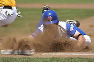 University of Florida's Jeff Corsaletti gets a face full of dirt, sliding safely back into first base.  Florida defeated Tennessee in the first round of the College World Series 6-4 at Rosenblatt Stadium in Omaha, Nebraska on June 17, 2005.
