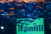 Sunday January 11th 2009. Paris, France..Famili. Aquarium du Trocadero....