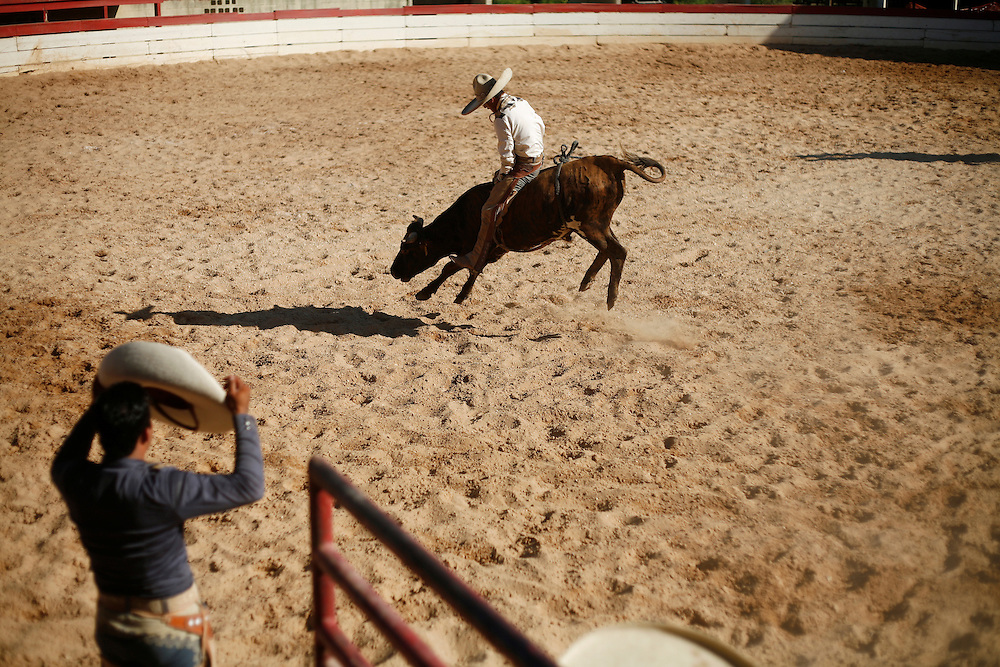 Julia Robinson photo.Fans of American rodeo will recognize bull riding, or Jineteo de Toros, with a few differences.  Charreadas use smaller stock and must ride the animal until it stops bucking, much longer than the American 8-seconds.  Charros earn points for the duration and difficulty of the ride as well as style.