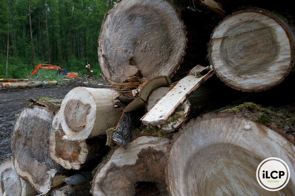 Felled trees, Fort Langely, British Columbia.